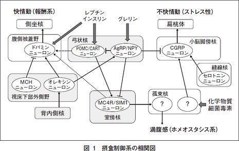 恒常性調節系による報酬系調節系の制御の解説図