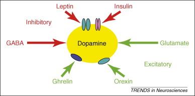 ドパミン放出を制御する物質をまとめた図