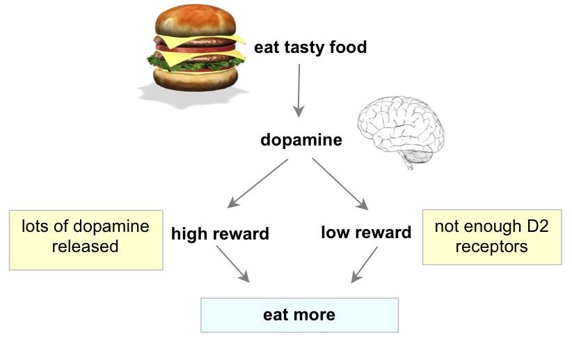 ジャンクフードや高脂肪食による報酬系におけるドパミン合成・分泌低下を示す図