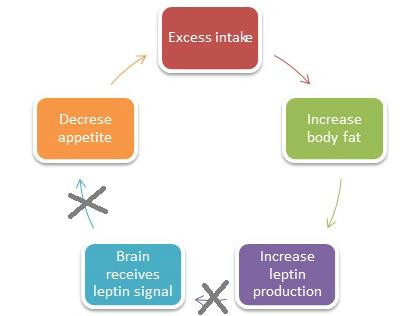 肥満の人でのレプチン抵抗性が食欲制御に悪影響を及ぼすことを説明した図
