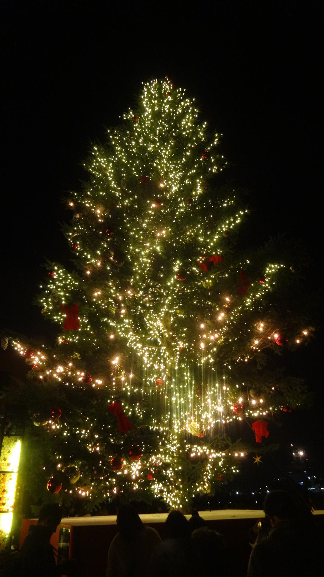 夜の輝くツリー