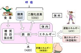 食事で摂った栄養素が体内で酸素によりエネルギーに変換される過程を示した図