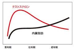 テストステロン値と内臓脂肪量の年齢による推移を示したグラフ