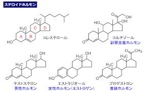 テストステロン エストロゲンの構造式