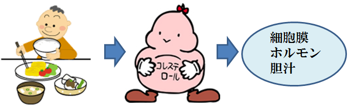 コレステロールが胆汁酸などを作ることを示すイラスト