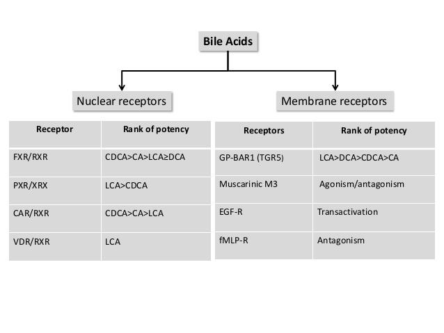 胆汁酸の受容体の一覧表