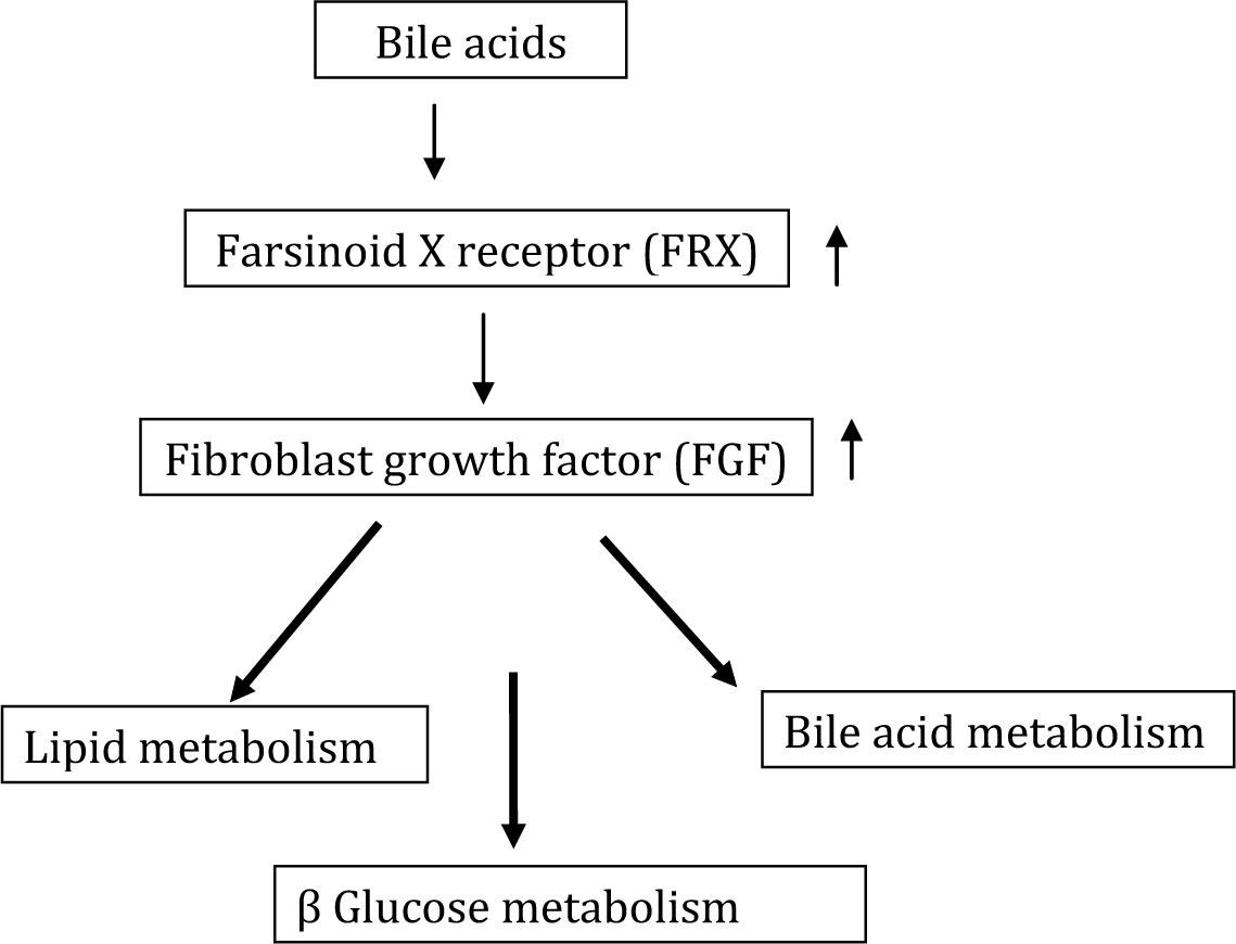 胆汁酸のFGF19を介して発現される作用をまとめた図