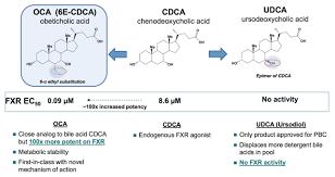 オペチコール酸の構造図