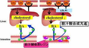 胆汁酸吸着レジン治療の概要を示す図