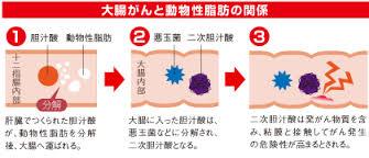 二次胆汁酸の発がん作用を示した図