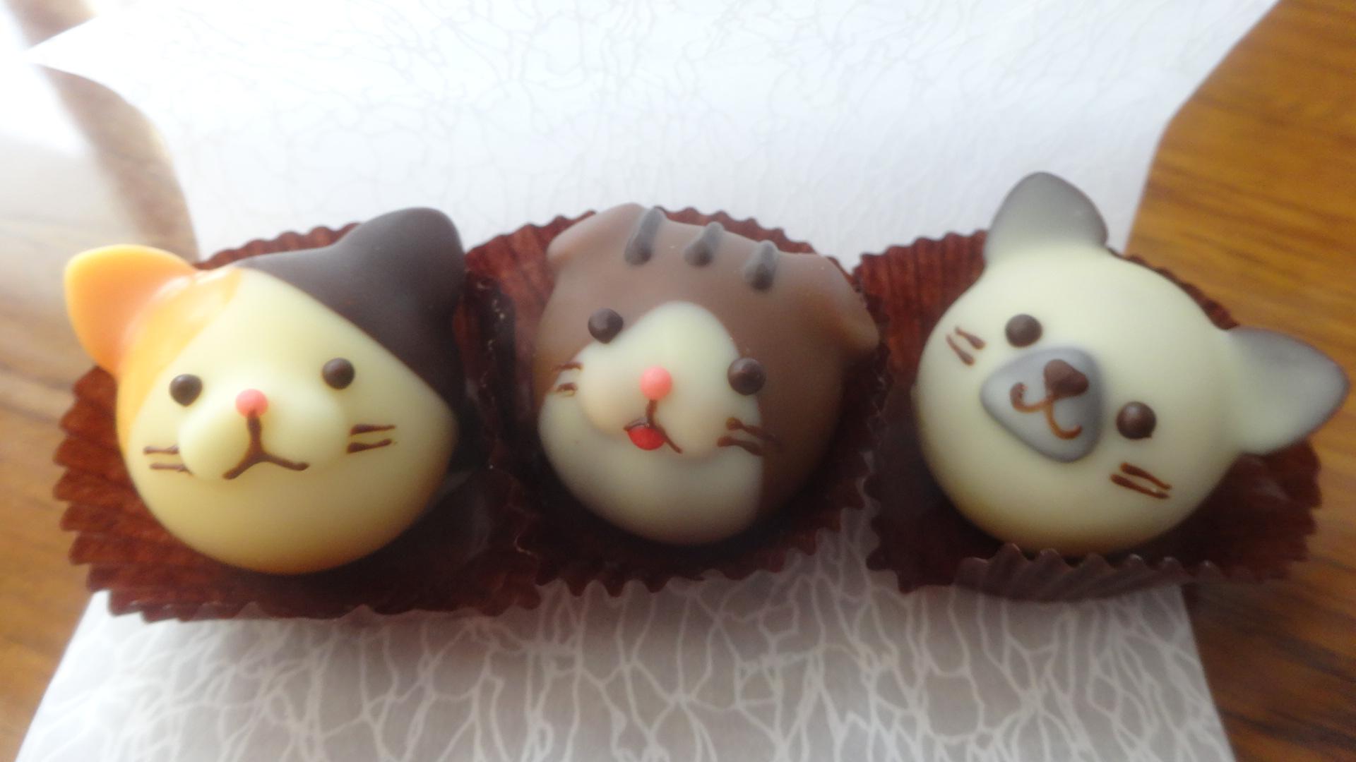 茶色 白 黄色の3匹のネコ顔のチョコレート