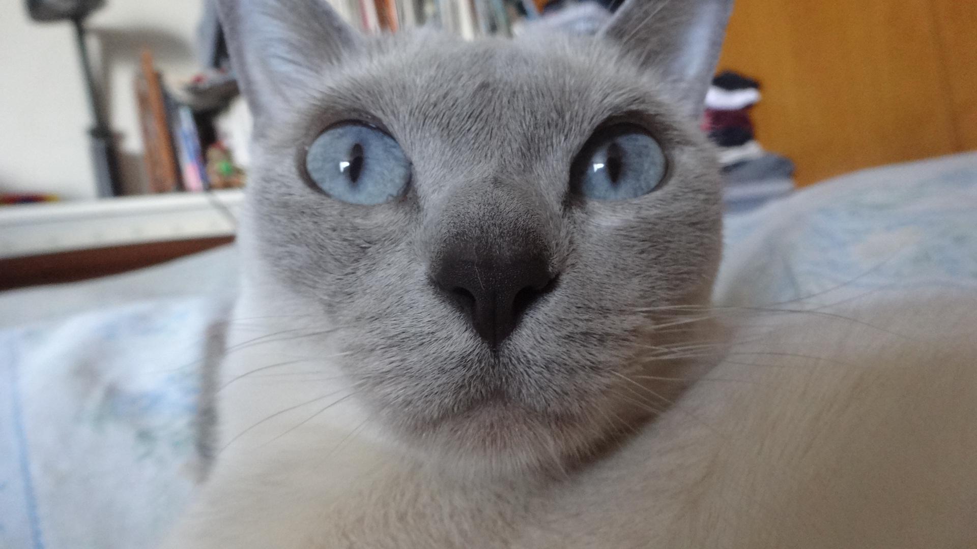 実物の楓の顔写真