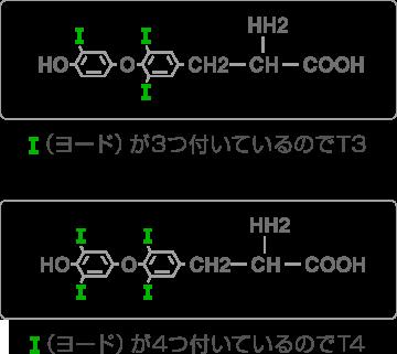甲状腺ホルモンの構造