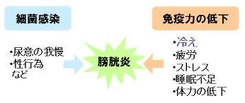 免疫力低下による感染が膀胱炎の原因となることを示す図