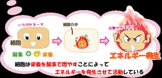 細胞内で酸素を用いて栄養素がエネルギーに変換されている過程を示す図