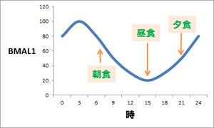 bml1発現の日内変動