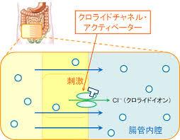 アミティーザの作用機序を示す図