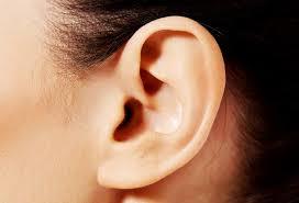 耳のアップの写真