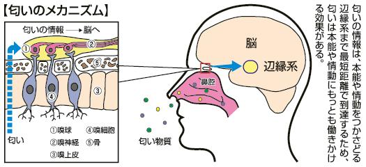 嗅覚により瞬間 瞬時に直観が働くことを示す図