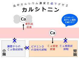 カルシトニンの働きをまとめた図