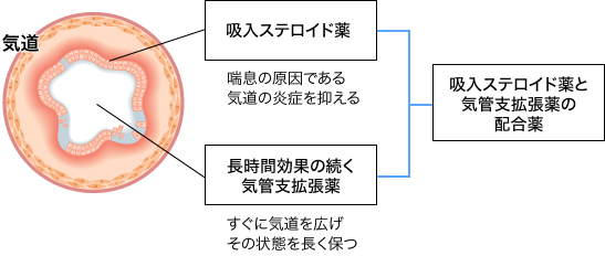気管支拡張剤と吸入ステロイド薬の合剤の作用機序を示す図