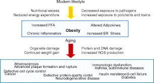 生活習慣病では細胞の老化が促進され 慢性炎症が惹起され さらに老化が進むことを示した図