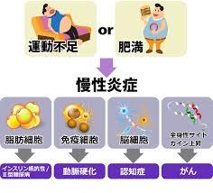 生活習慣病を引き起こす因子が慢性炎症を誘導することを示した図