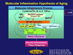 慢性炎症と老化が相互作用を示し 病態が進展することを示す図