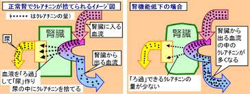 腎臓の働きが低下すると 血液中のクレアチニンが増加する機序を説明した図