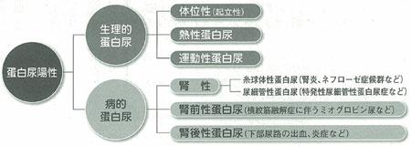 蛋白尿の意味について説明した図