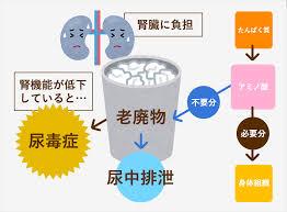 尿毒症になる機序についてまとめた図