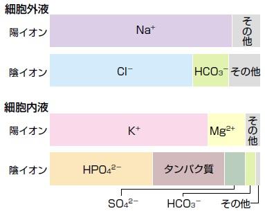血液中に存在する陰イオンで いちばん多い成分であることを示すグラフ