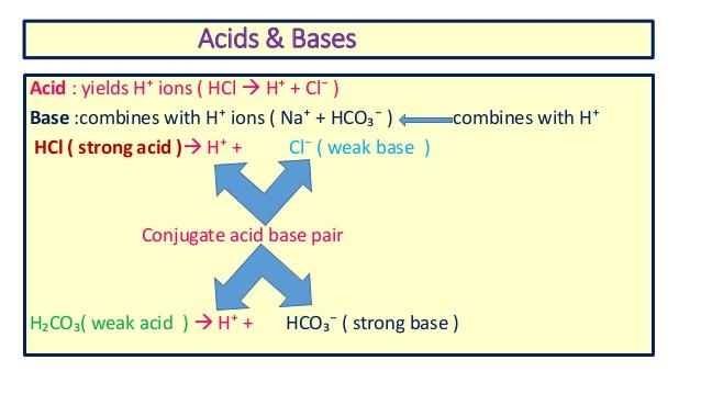 クロールとHCO3の比率調整で血液中のpHを一定に維持するシステムについて解説した図