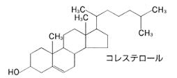 コレステロールの亀の甲のような構造