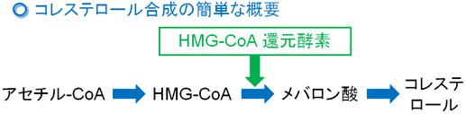 アセチルCoAからコレステロールの合成とその反応に関与するHMG-CoA還元酵素の役割の図示