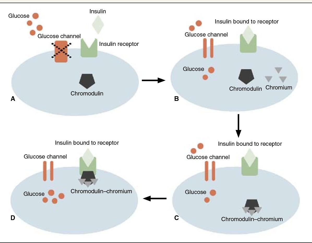 クロモデュリンの作用をまとめた図