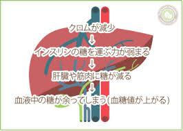 クロムの欠乏は耐糖能低下を引き起こすことを示す図