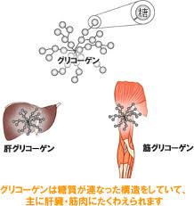 グリコーゲンが肝臓 骨格筋に蓄えられることを示す図