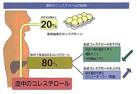 コレステロールの80%が体内で合成されることをアピールする図