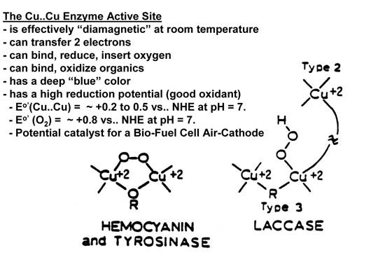 銅が補酵素として働く酵素をまとめた表