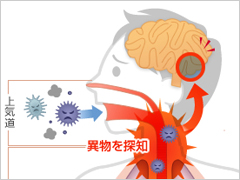 咳を引き起こす異物等をまとめた図