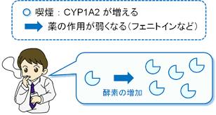 喫煙によるCYP1A2の活性増強とテオフィリンの作用減弱の説明図