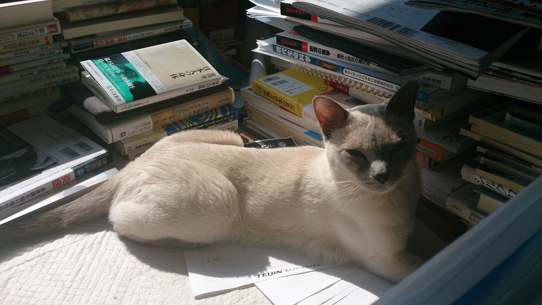 書き手の机の上で寝る楓