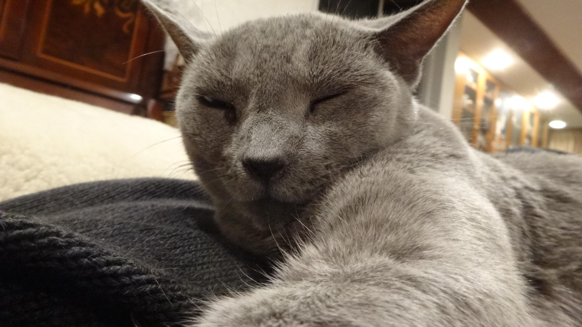 体の上で満足そうに寝るデイジー