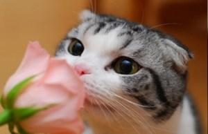 花のにおいをかぐ猫の姿