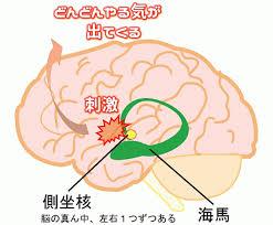 ドパミンの側坐核での報酬系や快楽に関わる神経活動への関与を示す図