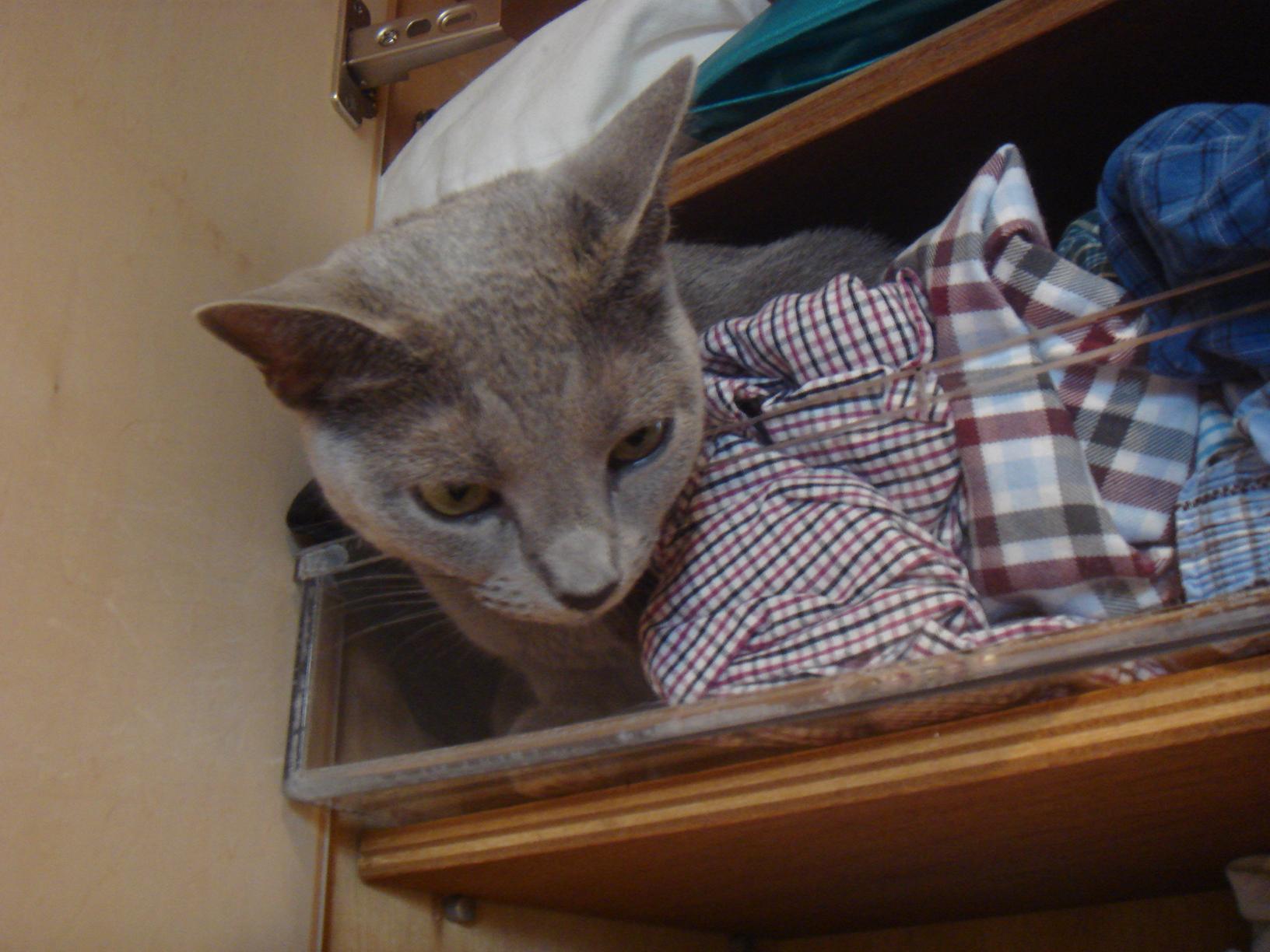 書き手の狭い衣類棚に入りこむデイジー