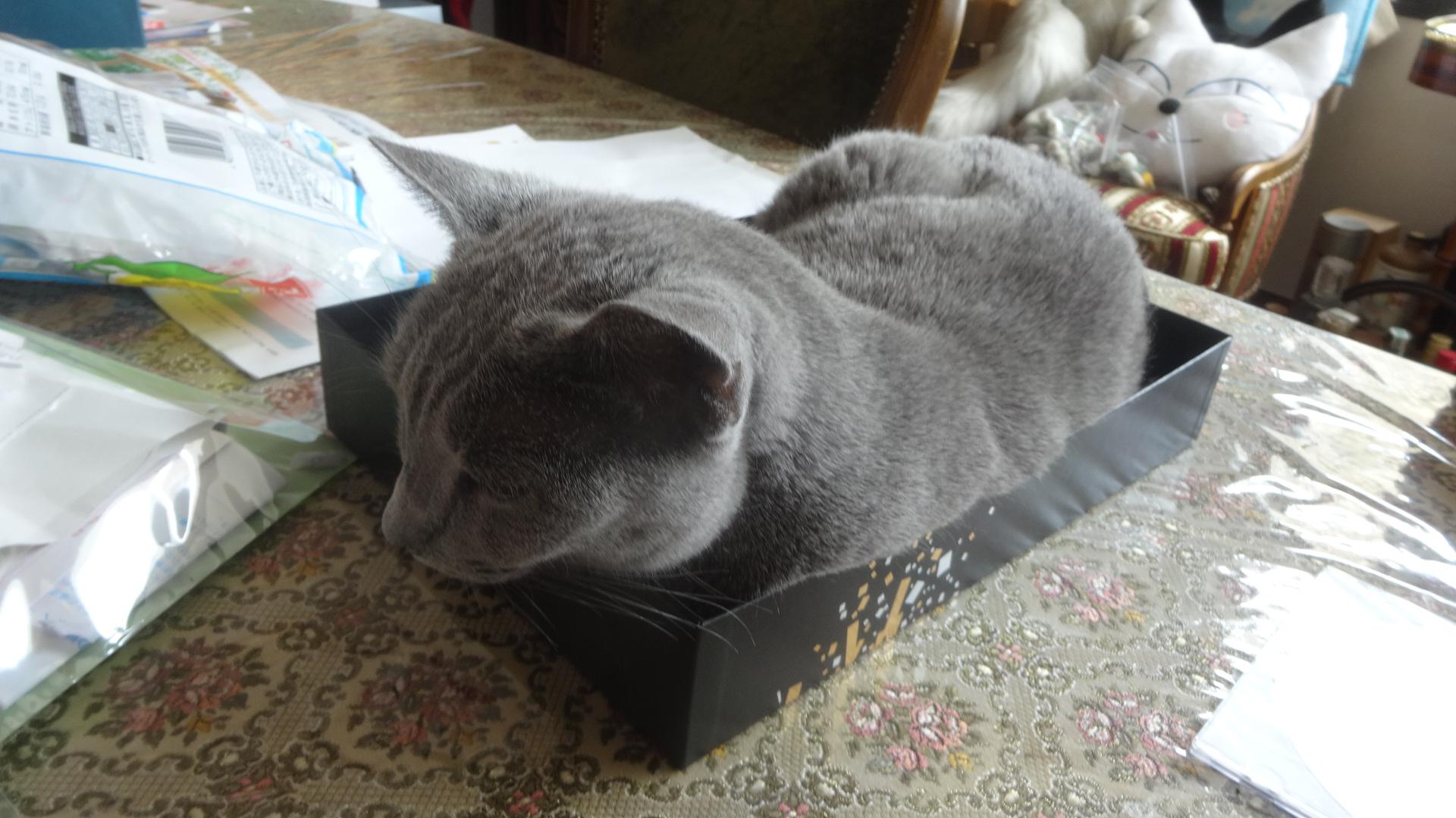 箱に入るデイジー