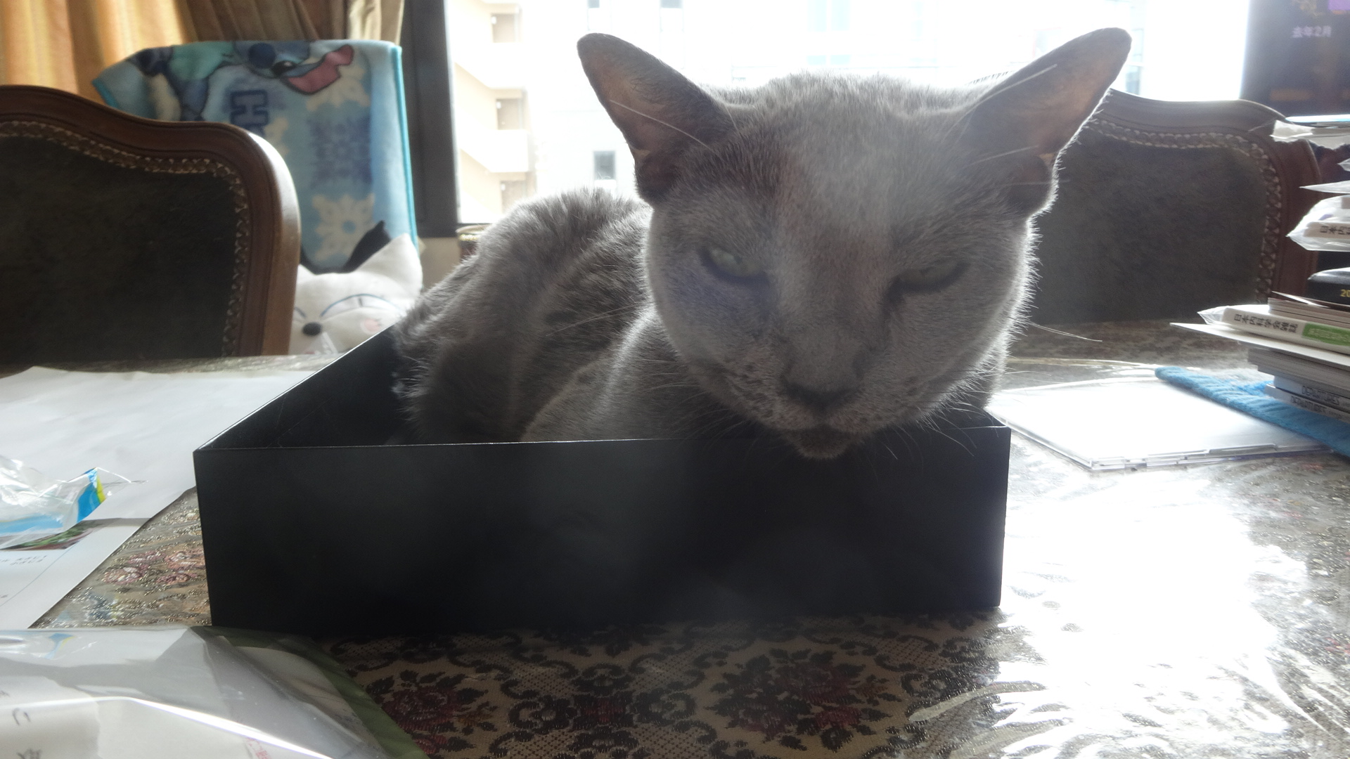 箱に入り満足そうなデイジー