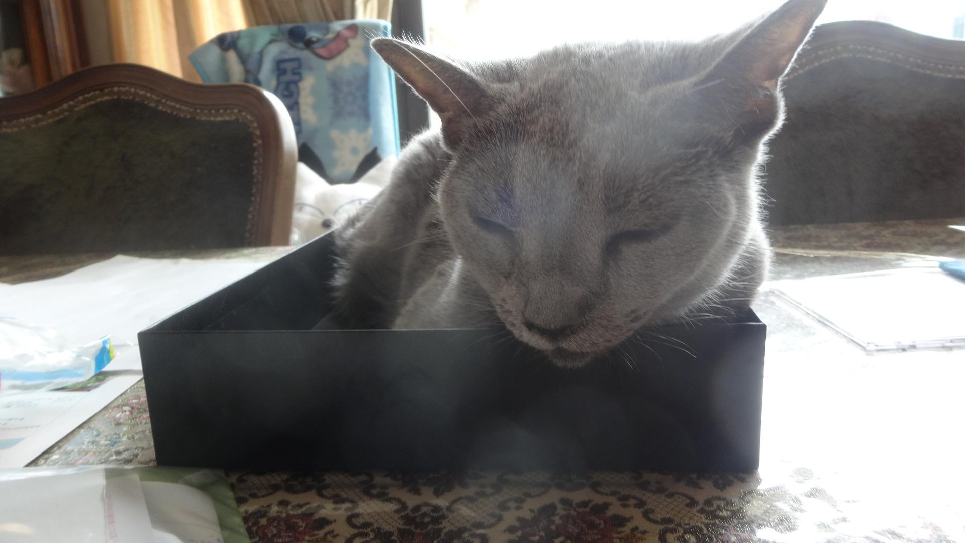 眠そうなデイジー